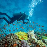 diving sites in south africa
